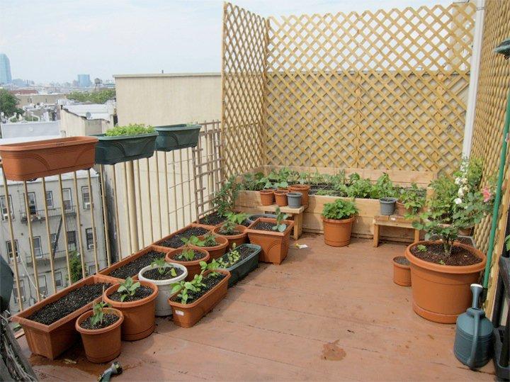 Garden2010