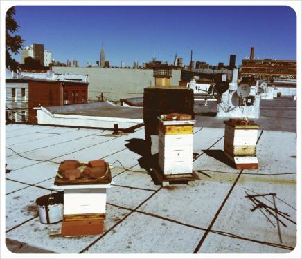 rooftopbees.jpg