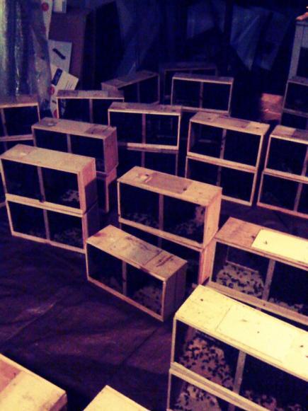packagebees.jpg