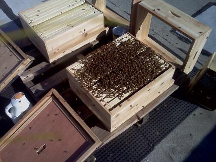 hive_dump.jpg