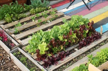 saladpallet.jpeg