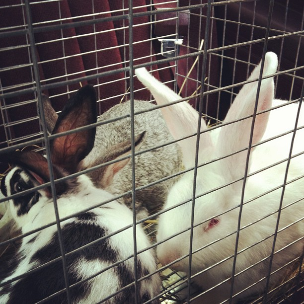 backseatrabbits.jpg