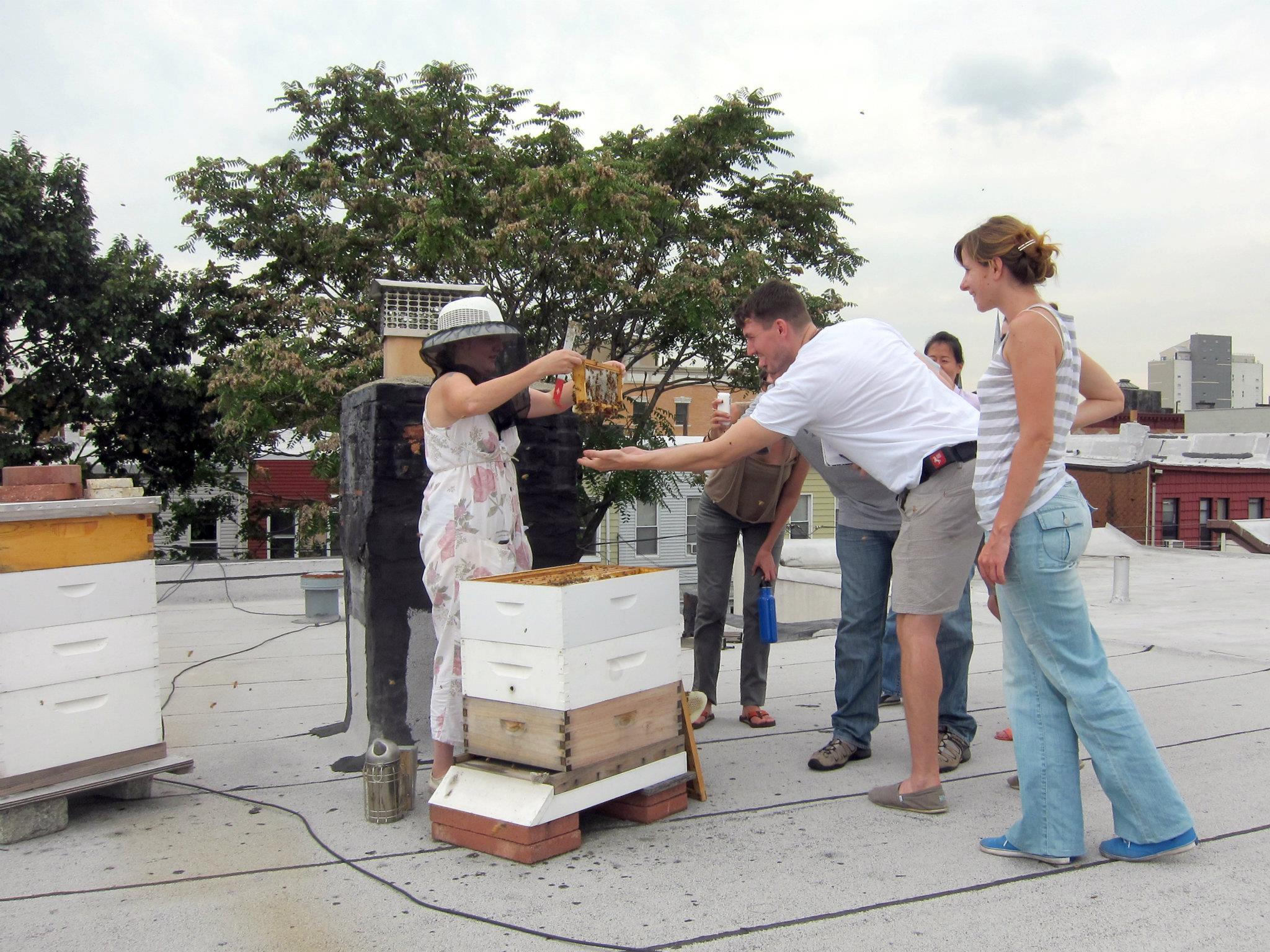 beekeepingMICHAELLEUNG.jpg