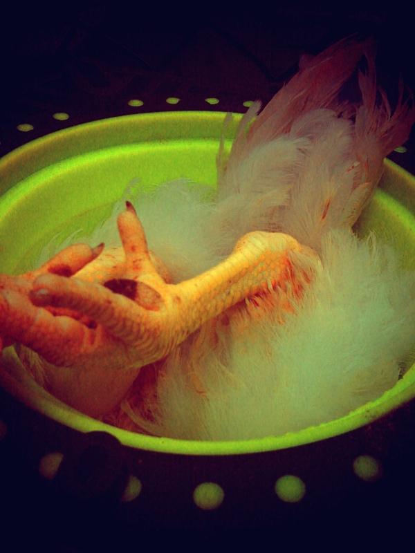 chickenfeet.jpg