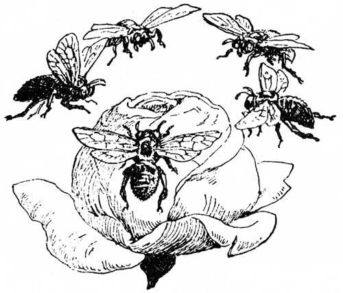 honeysucklerosies.jpg